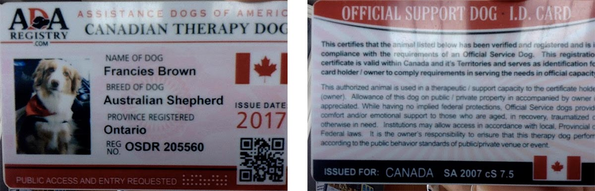 therapy dog in london and woodstock | the counselling house